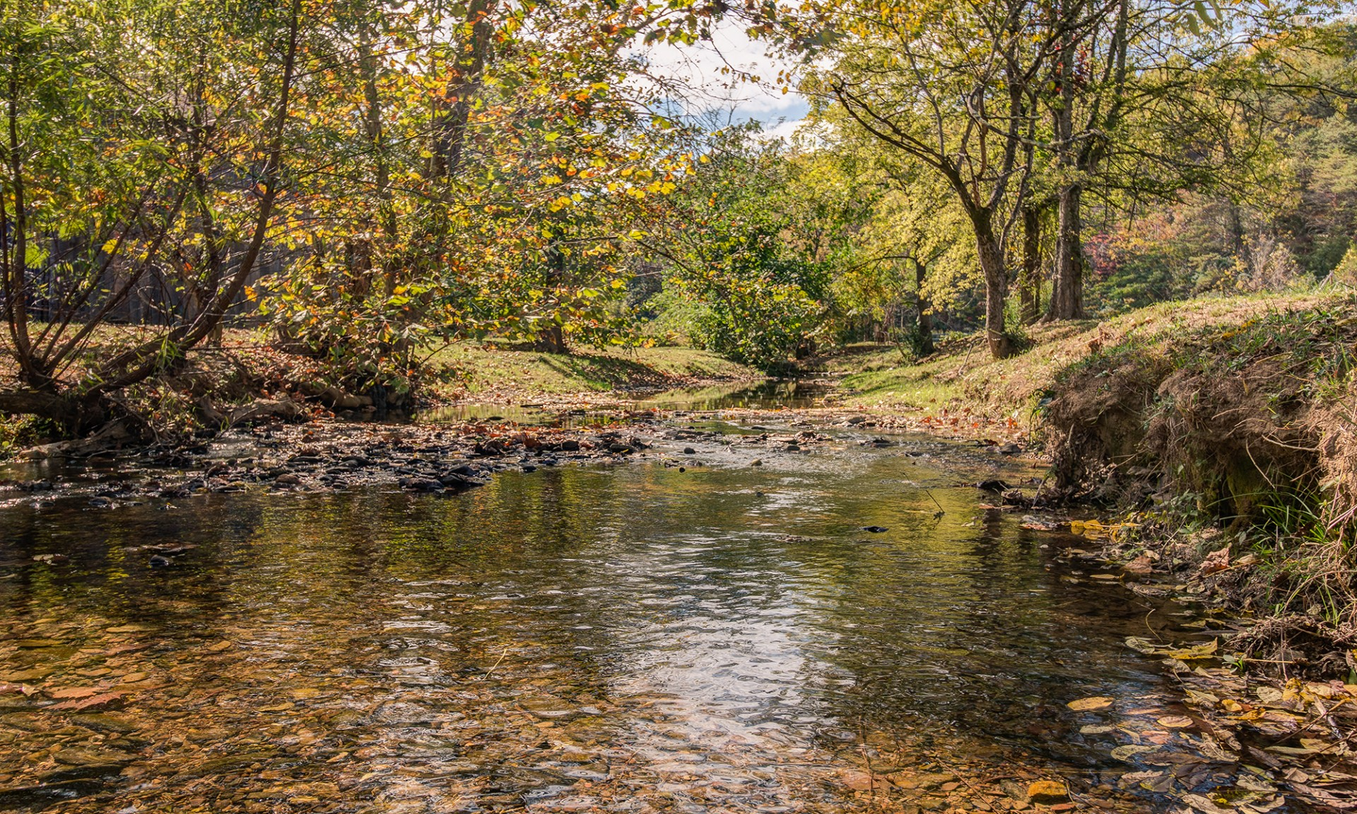 Bird's Creek